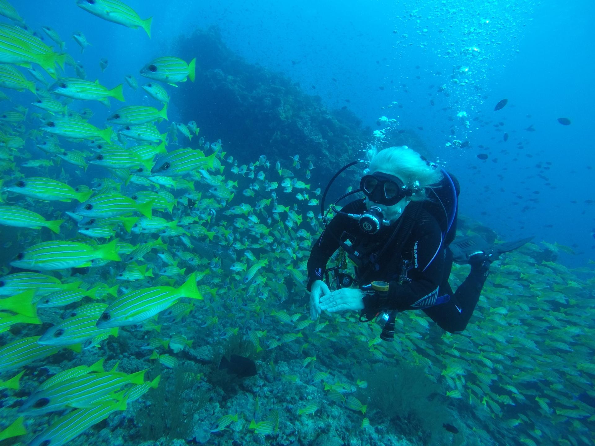 Gill Fish in Maldives